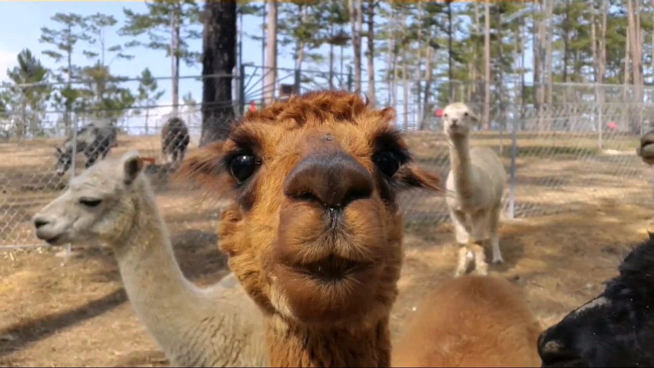 Zoodoo Đà Lạt - Phát sốt với sở thú châu Âu tha hồ sống ảo cháy ...