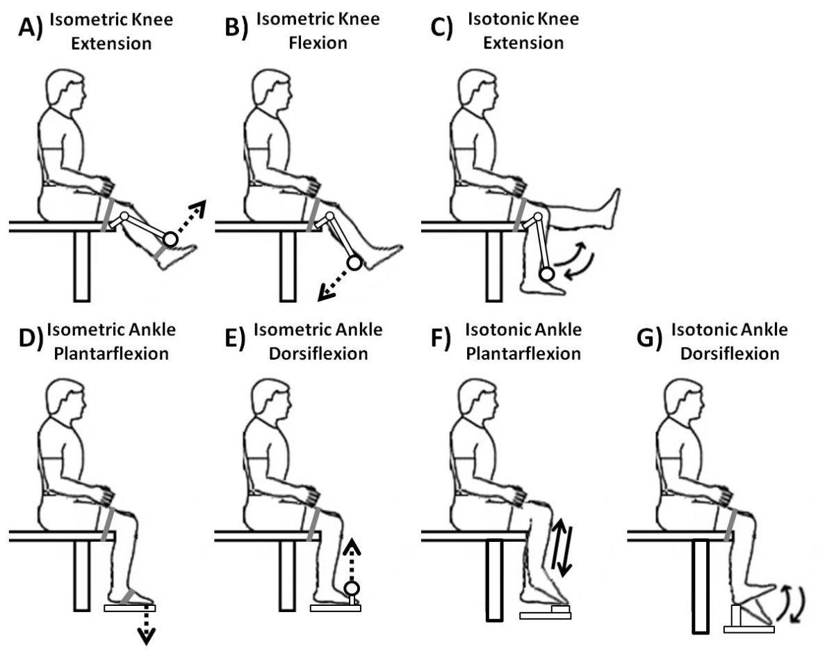 Printable Sample Isometric Exercises Form
