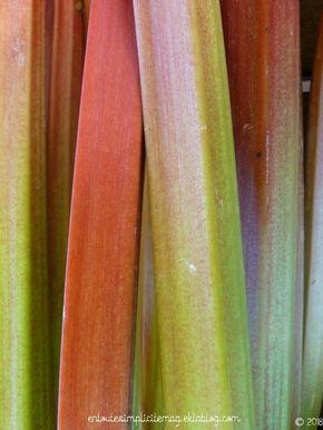 La Rhubarbe Culture Et Recolte Rhubarbe Culture Recolte