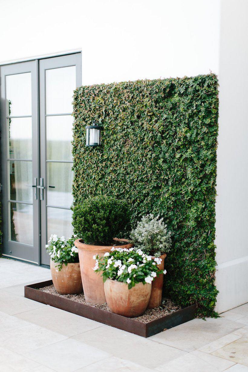 Pared verde plantas pinterest paredes verdes verde for Jardines pequenos verdes