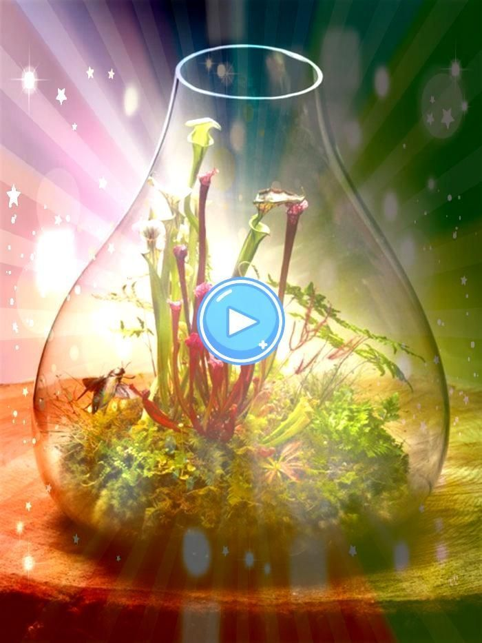 Sie ein Terrarium selber bauen terrarium selber bauen tolle idee für pflanzen terrariumÜber 40 Vorschläge wie Sie ein Terrarium selber bauen terrarium selb...