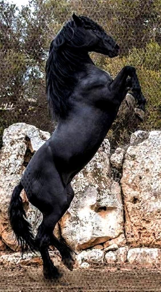 Samsung Wallpaper Black Horses - Lil AlDelon ... - samsung Hintergrundbild -