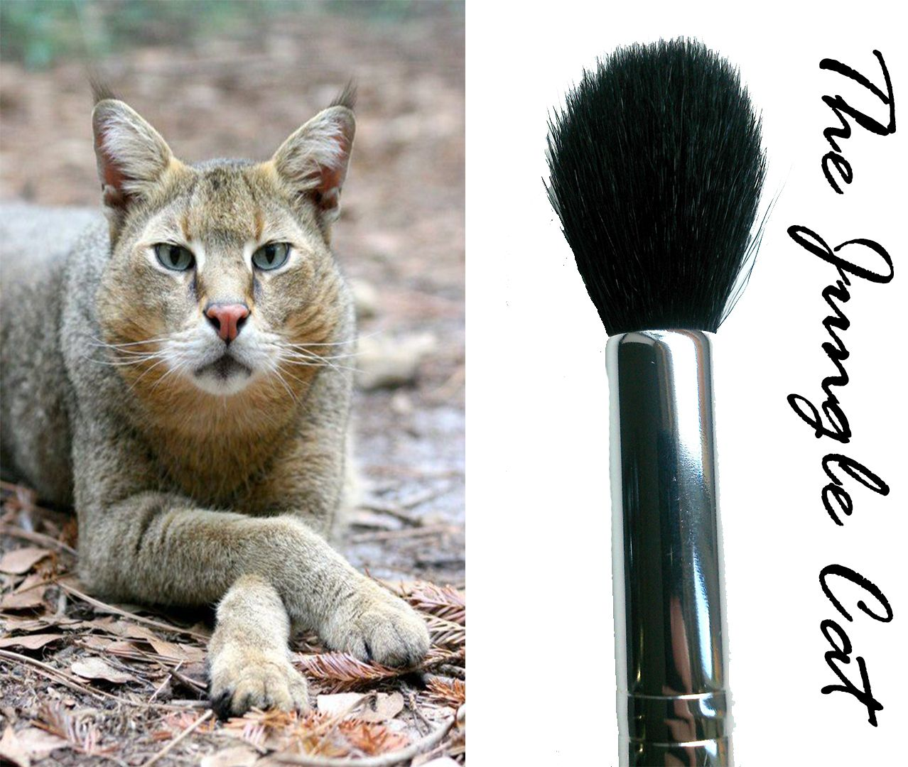 The Jungle Cat - Tapered Highlighter Brush For a long, slim face like the Jungle cat has use our perfect tapered highlighter brush. This brush will help create definition and angles on your skin for model worthy looking bone structure!