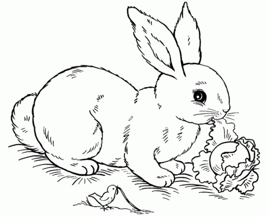 Free Rabbit eating cabbage coloring pages Letscolorit