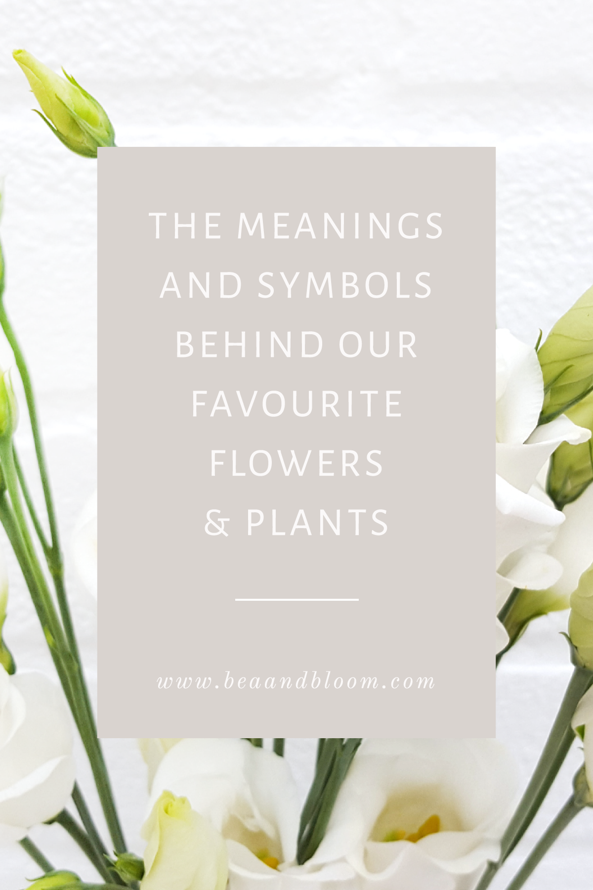 The Language Of Flowers Part I With Images Language Of Flowers Popular Flowers Planting Flowers