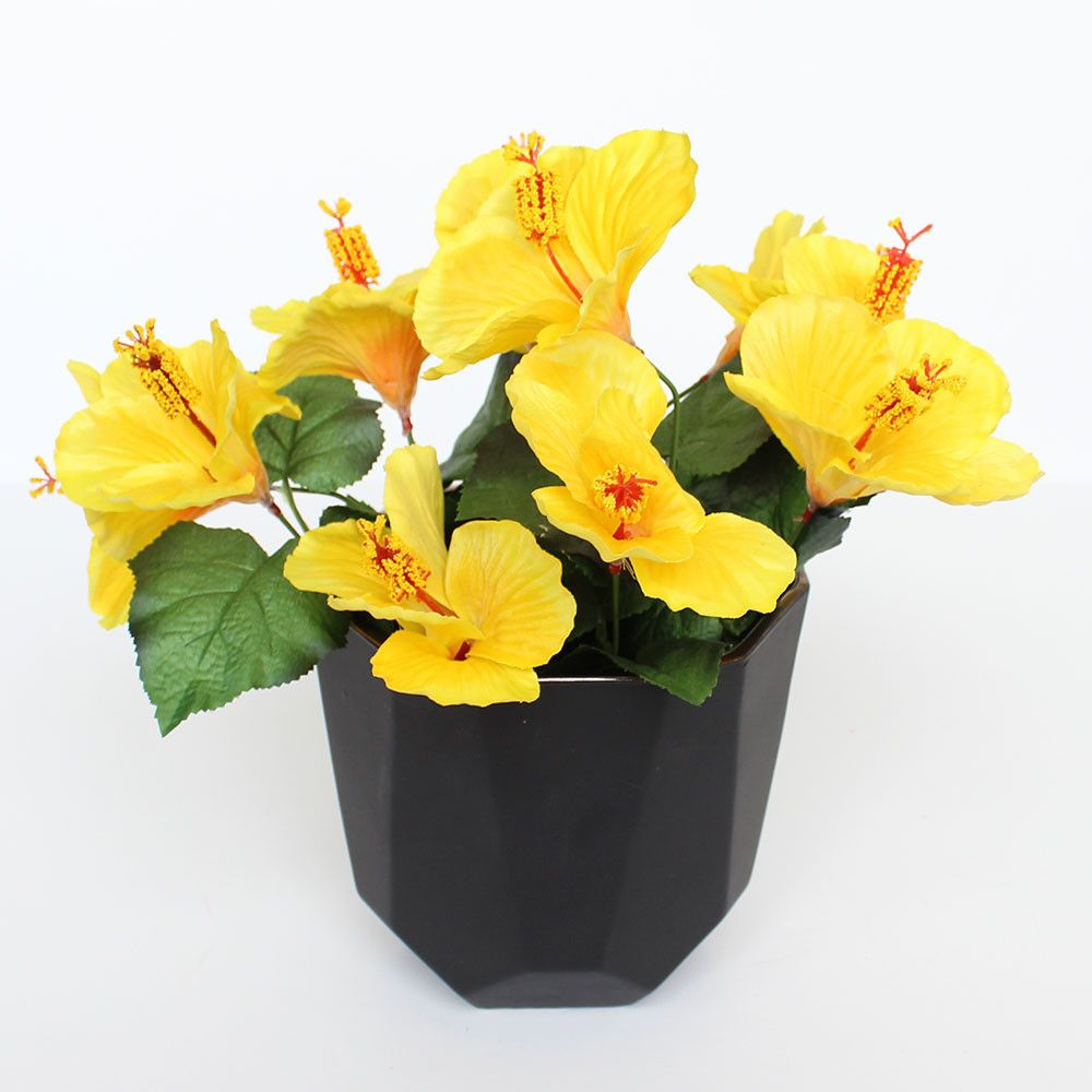 Satin Hibiscus Bush In Yellow 5 Blooms X 18 Tall Library Work