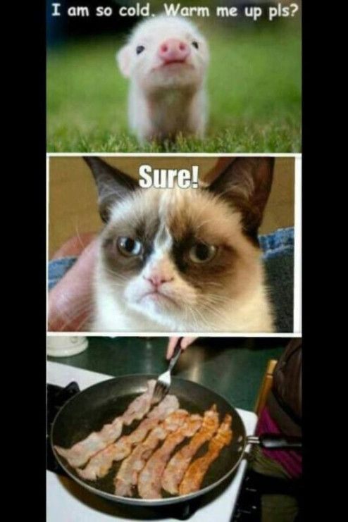 7e61446e765f0171138e4565e29209b4 my favorite grumpy cat memes grumpy cat, memes and cat,Im So Cold Meme