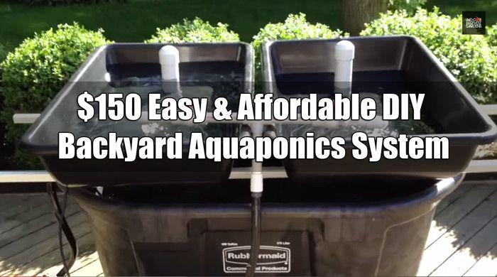 150 Easy Affordable Diy Backyard Aquaponics System