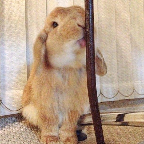 Itu0027s pole DANCING, dancing not lickingomg dumbunny bunnyluv - resume rabbit cost