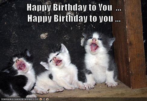 Happy Birthday To You Happy Birthday To You Cat Birthday Funny Happy Birthday Cat Funny Cat Memes