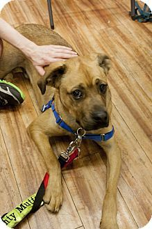 Pictures Of Christopher A Catahoula Leopard Dog X2f Boxer Mix For