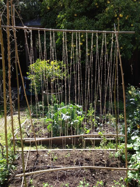 Pea Trellis Ideas Part - 47: Bamboo Teepee Trellis Ideas - Yahoo Image Search Results