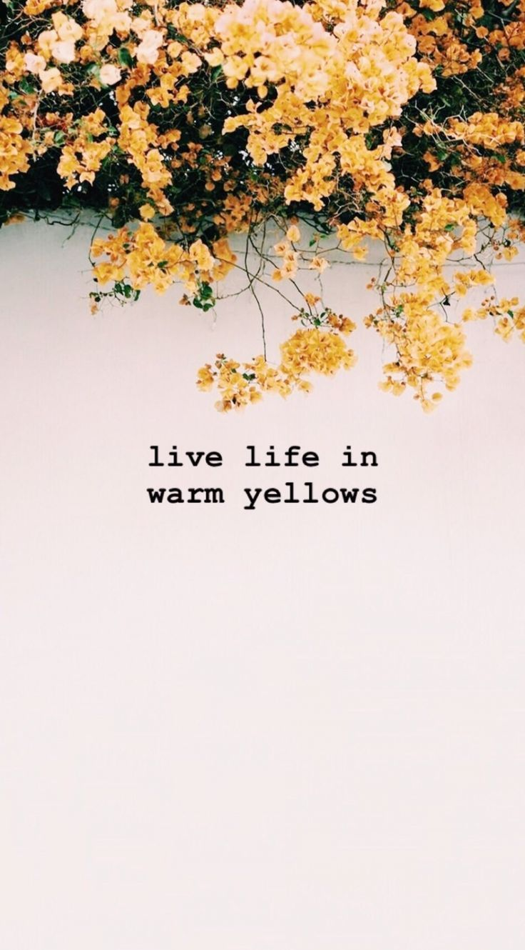 inspiring colour quotes ..wise words. Summer yellow flowers