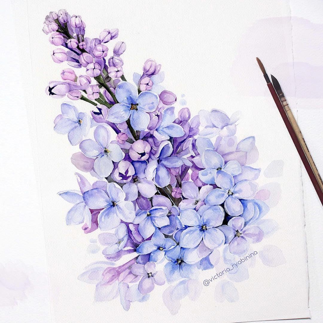Victoria Ryabinina Lilac Lilac Painting Flower Drawing Lilac Tattoo