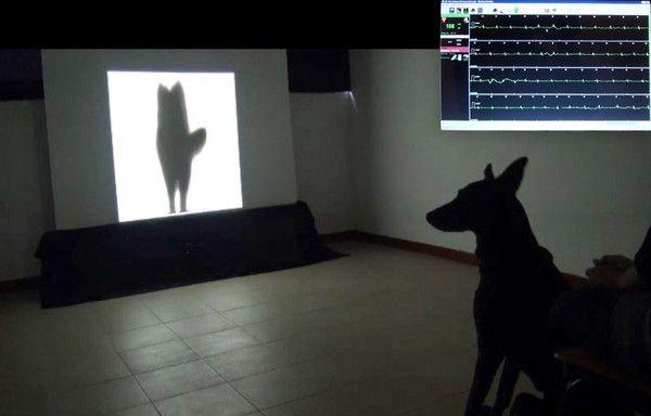 研究:狗尾巴的情緒狗最懂 向左害怕、向右開心