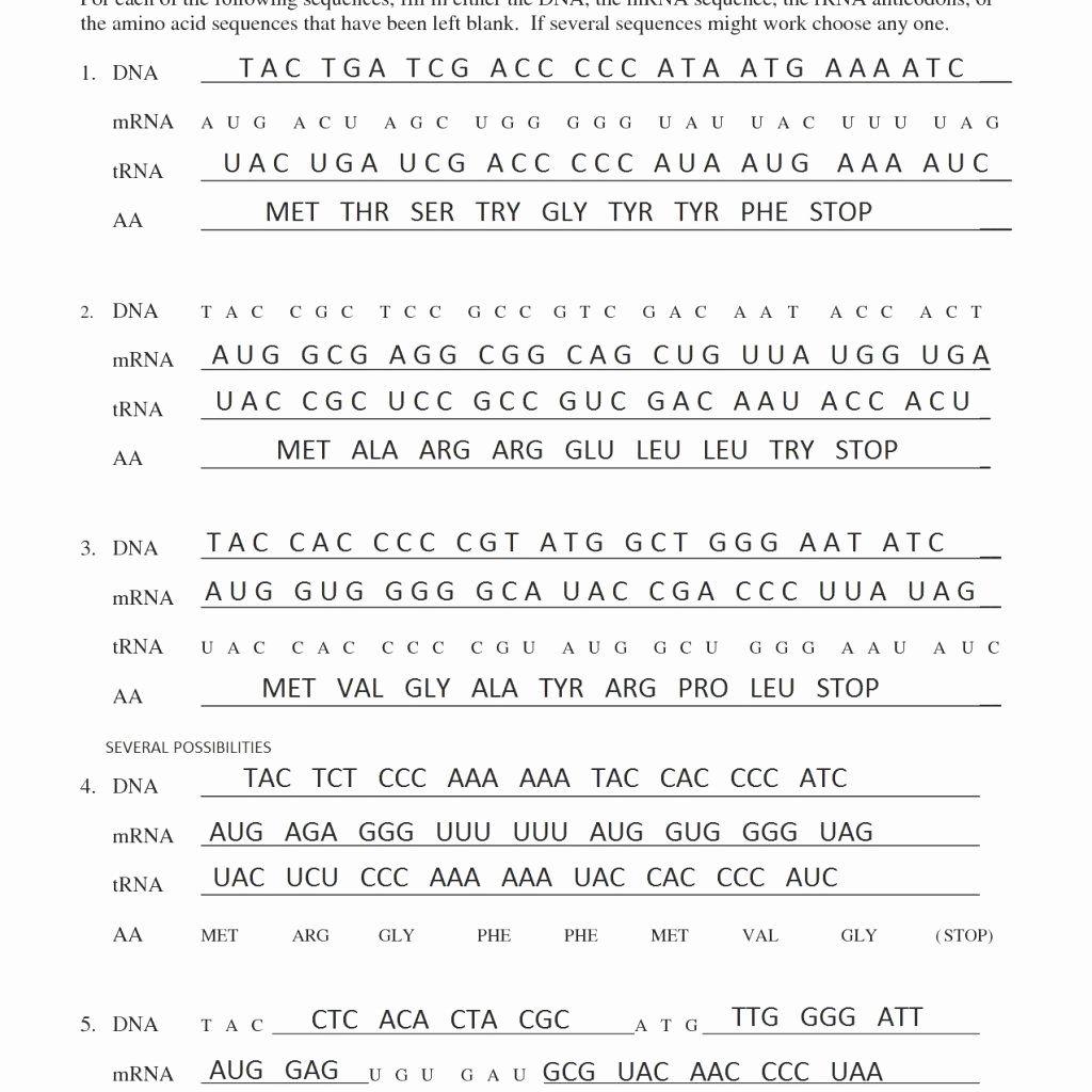 Transcription And Translation Practice Worksheet Best Of
