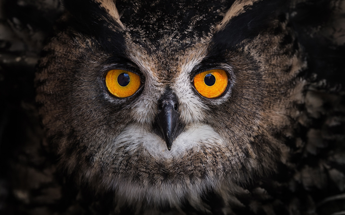 Download Wallpapers Owl Big Eyes Forest Bird Portrait Birds Besthqwallpapers Com Owl Bird Big Eyes