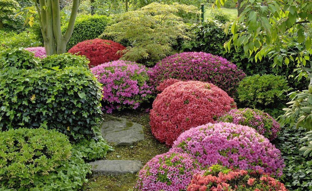 So Schneiden Sie Azaleen Richtig Azaleen Japanischer Garten Anlegen Japanischer Garten