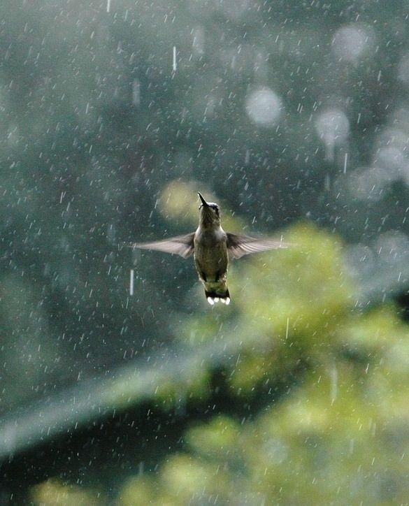 Pin By Tammy Shirley On Birds Dancing In The Rain Love Rain I Love Rain