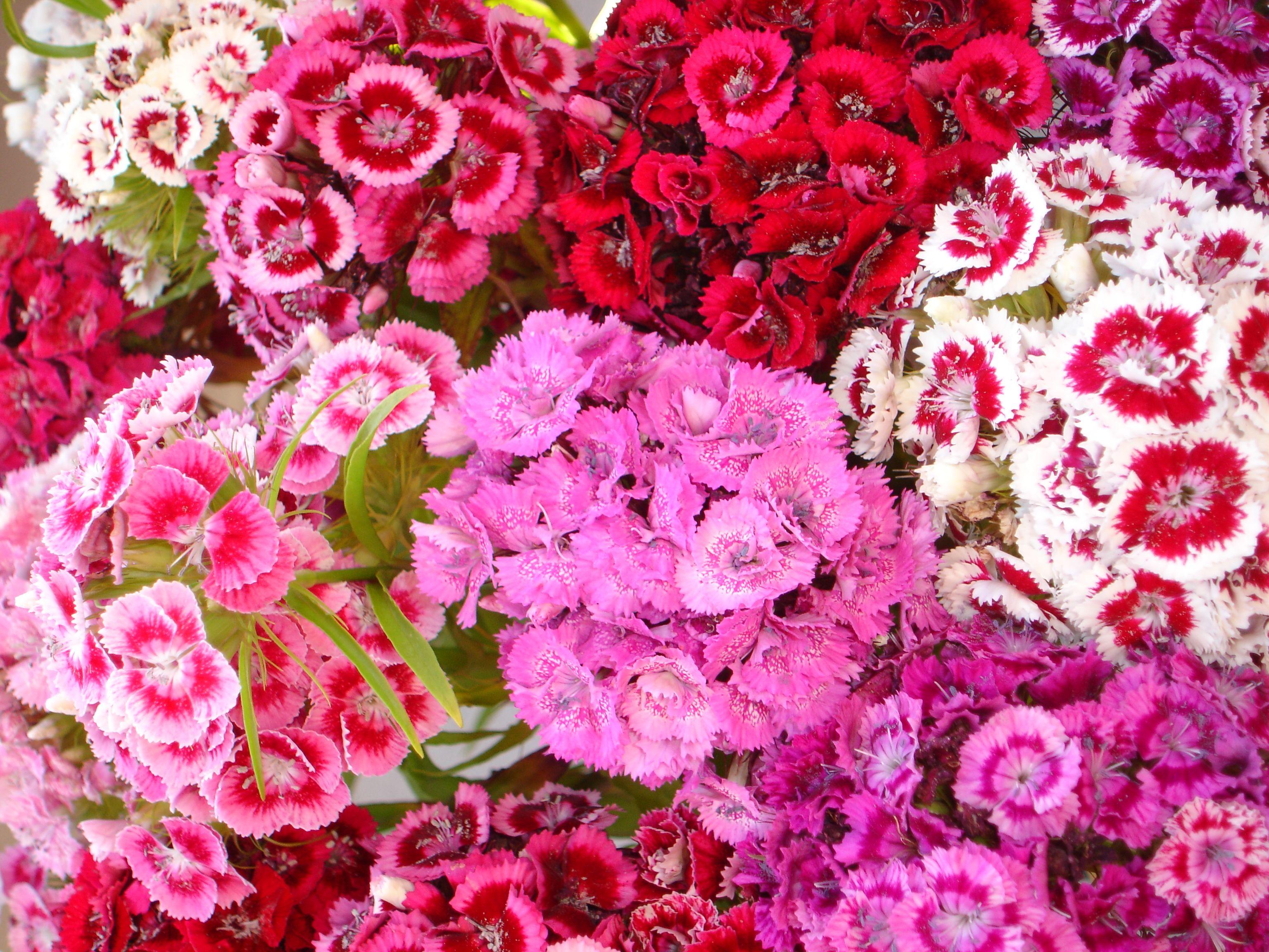 Image Detail For File June Summer Flowers Jpg Wikimedia Commons
