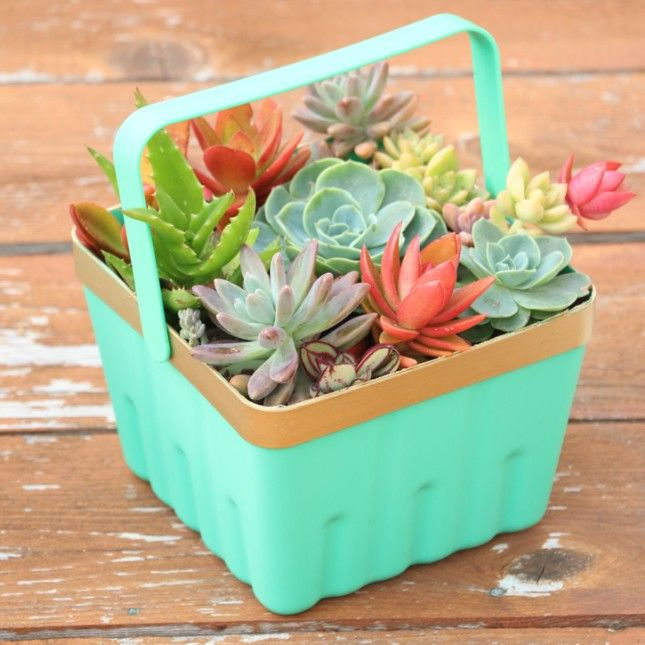 21 Creative Succulent Container Gardens To Diy Or Buy Now Succulent Planter Diy Succulents Diy Succulents In Containers