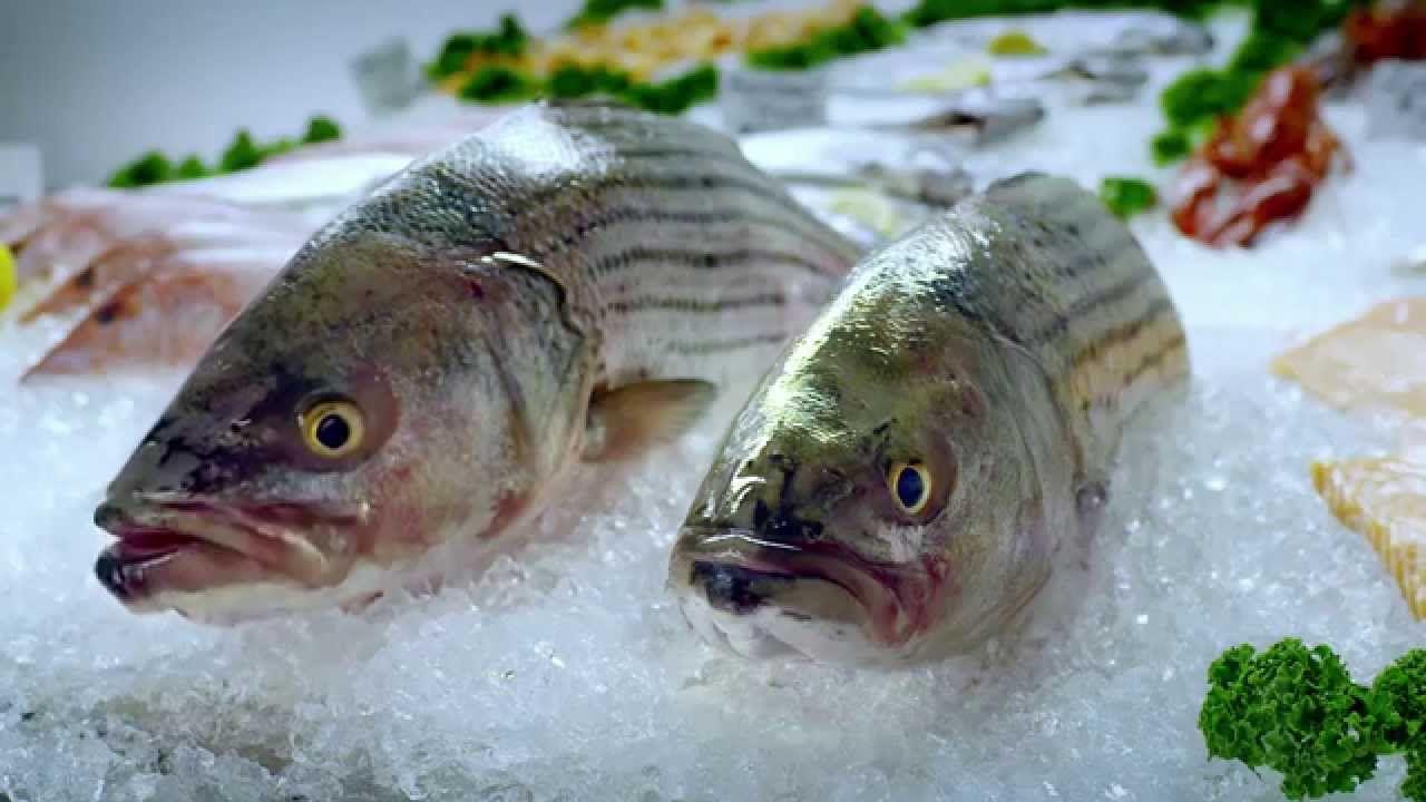 Take It From A Fish Astrazeneca Digitaslbi Spanish Mackerel Fish Lower Triglycerides
