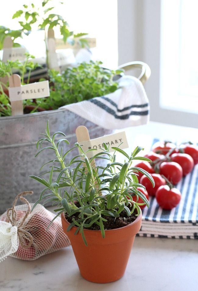 Grow a Tomato Sauce Garden\