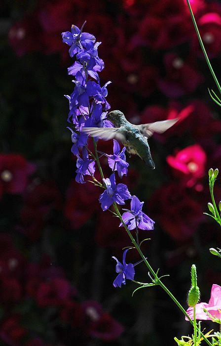 .los colibries son mágicos
