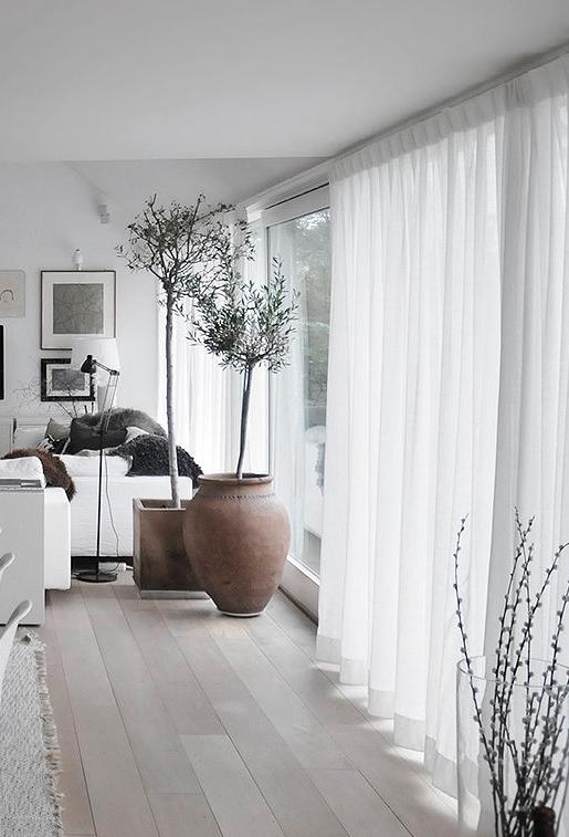 ficus succulentes cactus les plantes vertes s. Black Bedroom Furniture Sets. Home Design Ideas