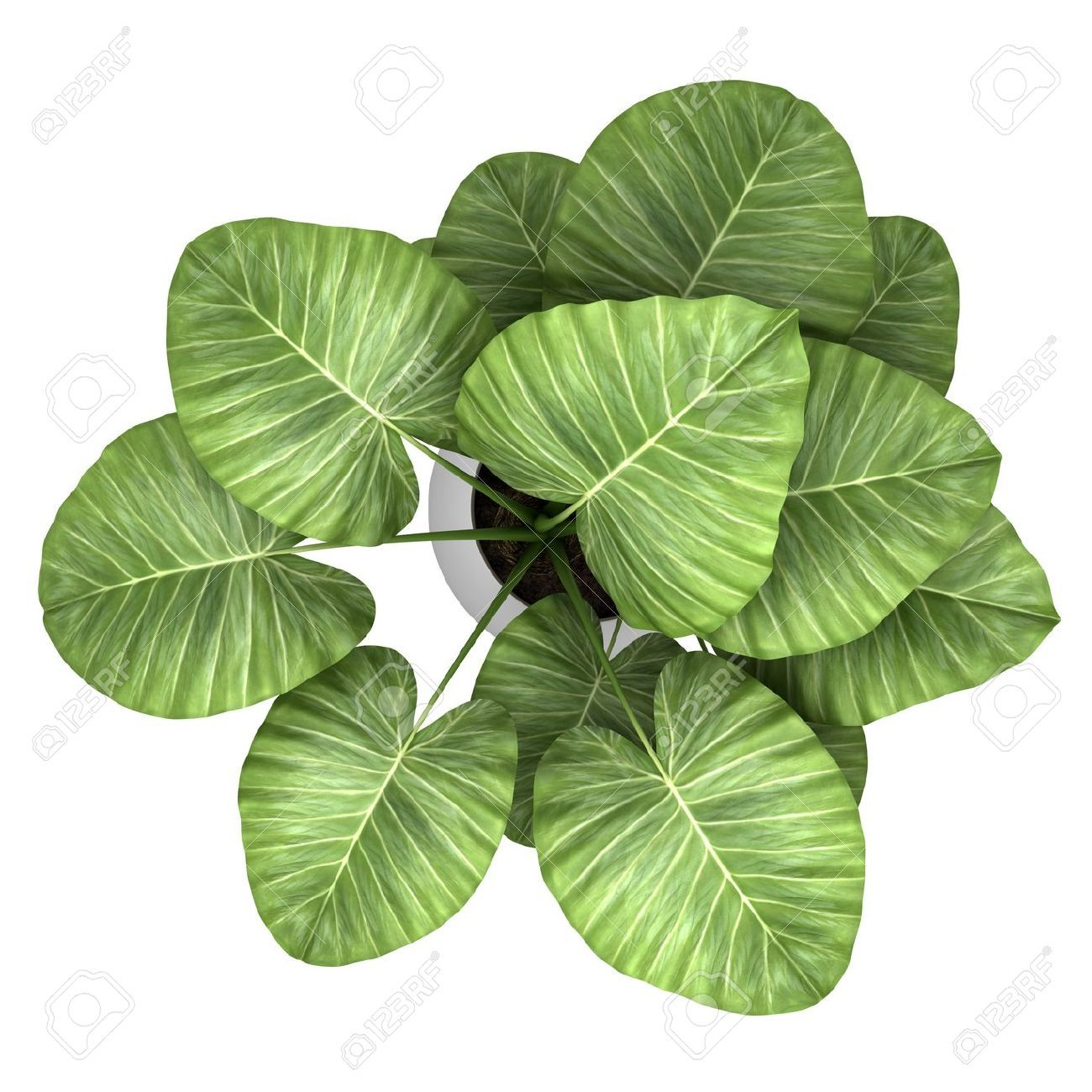 Pot plant top view google search green pinterest for Best aquatic plants
