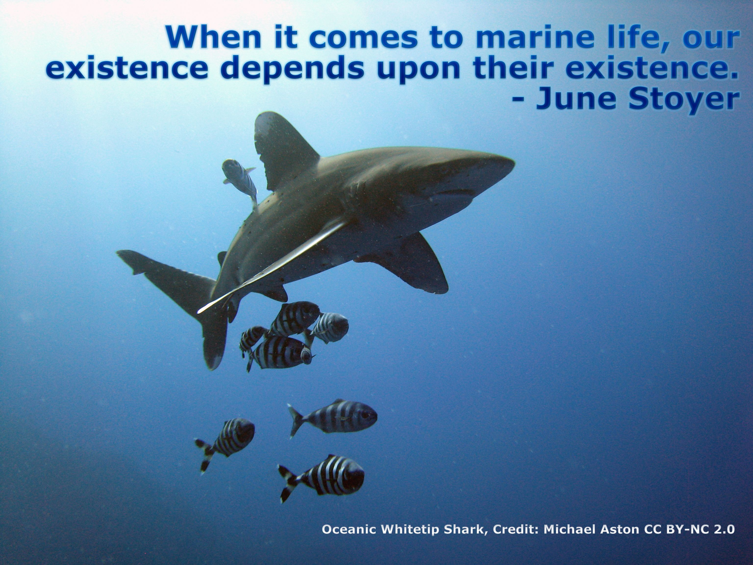 ocean ww marine Shark, Shark quotes, Marine life