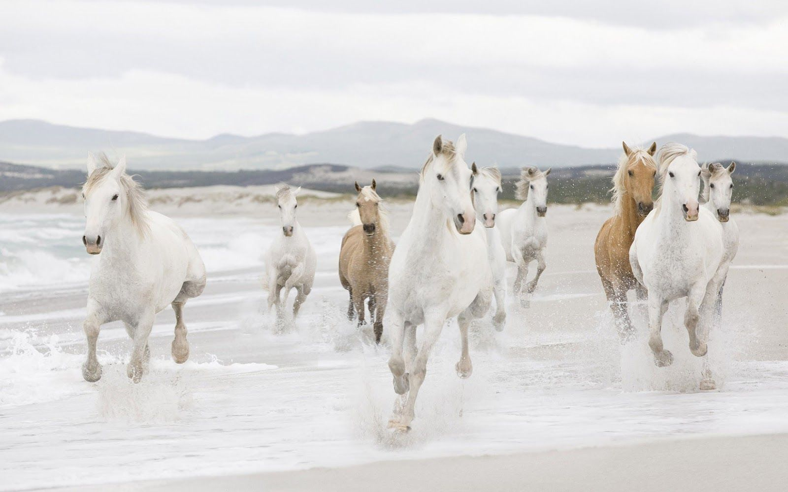 Fast Running Horses On The Beach Hd Animals Wallpapers Horse Mural Horse Wallpaper White Horses