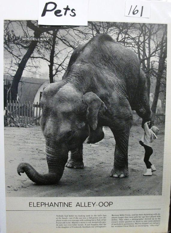 "Pets ... 161  ""Elephantine Alley-Oop""  - February 1965"