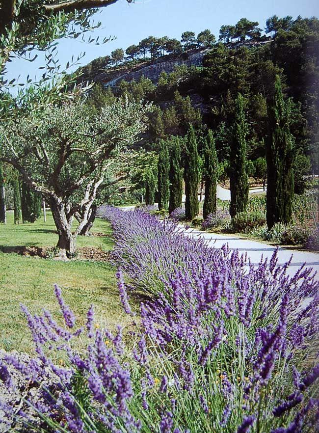 Paysage De Provence Jardin Mediterraneen Beaux Jardins Et