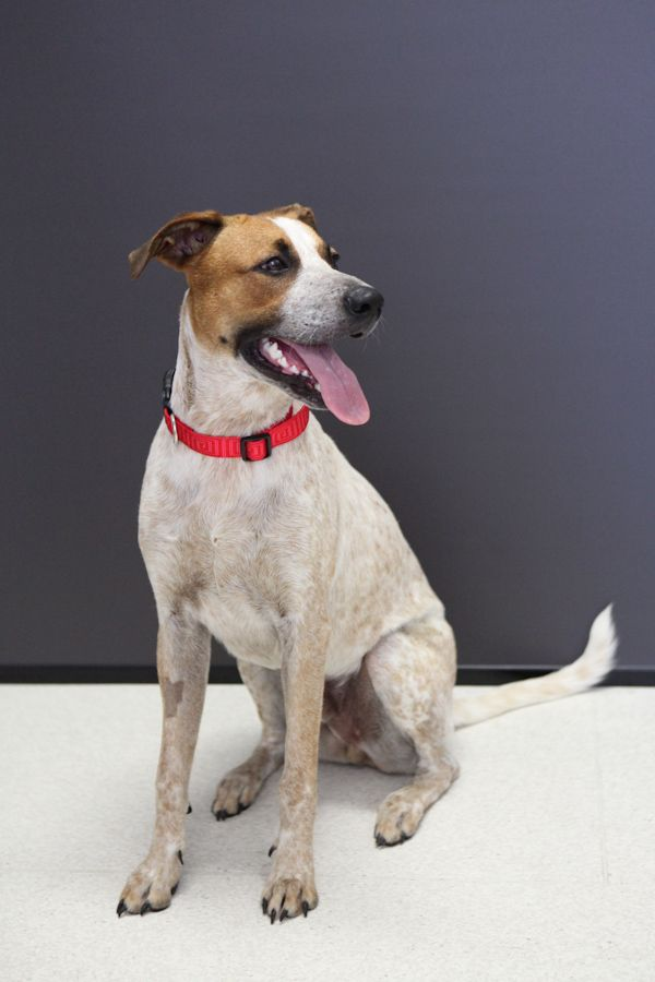 Hi I M Charlie I M In My Teenage Years In Dog Years So I M Looking To Learn The Ways Of The World I Would Benefit F Canine Companions Animal Rescue Animals