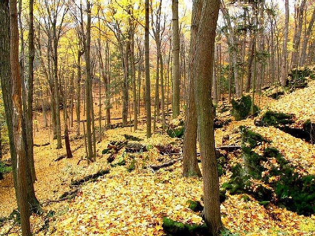 """Dundas Valley Conservation Area """"Main Loop"""" Trail."""