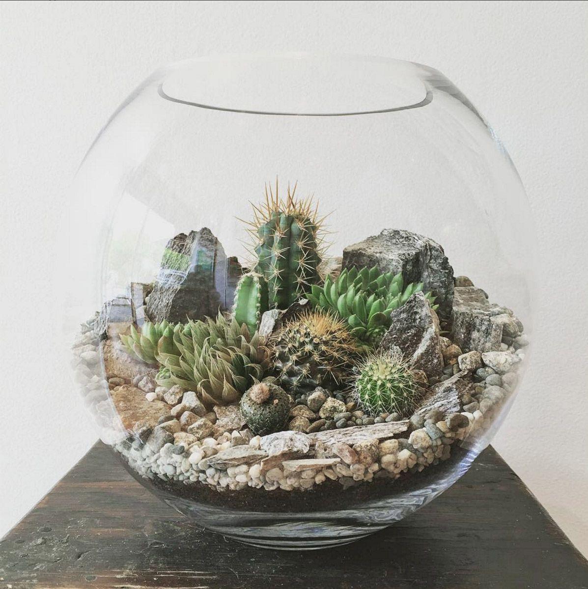 desert world terrarium medium terraria cacti and deserts. Black Bedroom Furniture Sets. Home Design Ideas