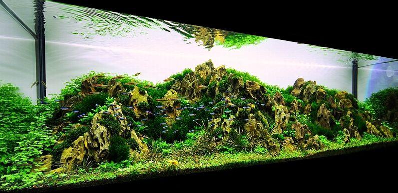 Bubbles Aquarium - Aquascapes (2009 Aquascaping Gallery ...