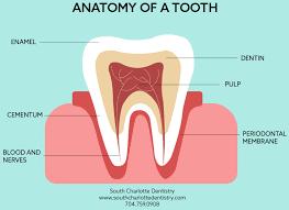 Dental Terminology Google Search In 2020 Dental Terminology Periodontitis Dental