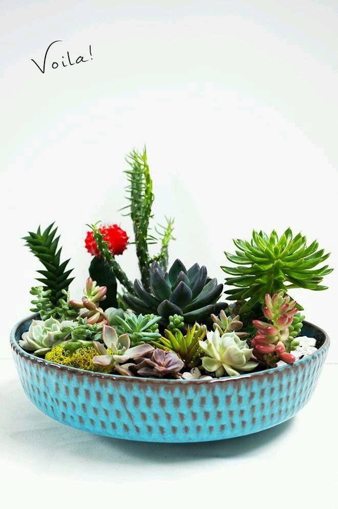 Diy Cactus Terrarium Cactus Gardens Succulent Planter Diy
