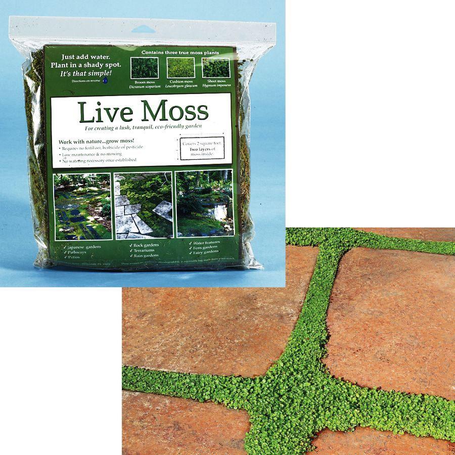 Live Moss Starter Kit (WhateverWorks.com - $40): Create your own ...