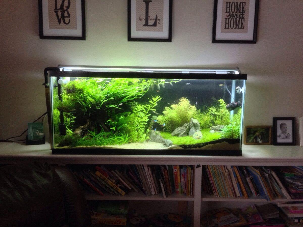 15 Gallon High Aquarium 1000 Aquarium Ideas