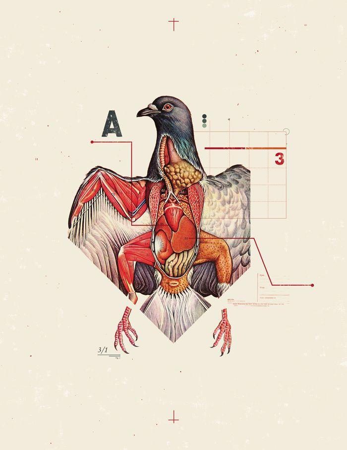 bird, dissection | Sepia | Pinterest | Bird, Anatomy and Illustrations