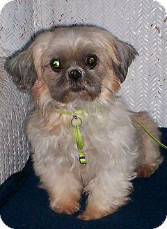 Pin By Anita Salas On Can You Help Shih Tzu Pets Pet Adoption