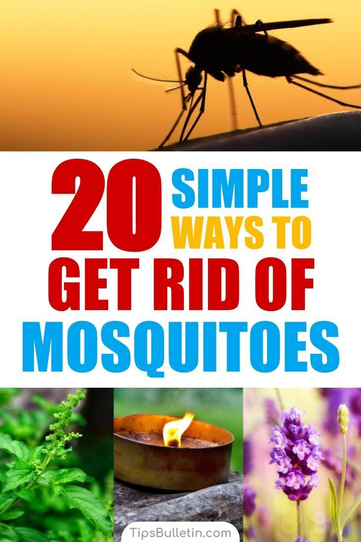 How to Keep Mosquitoes Away - 20 Simple Ways to Get Rid of ...