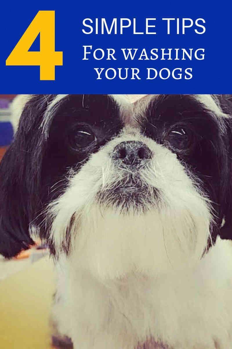 Dog Grooming Dog Training Dog Stuff Dog Ideas Dog Care