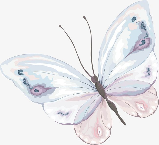 Hand Painted Watercolor Butterfly Material Watercolor Butterfly Butterfly Material Png Transparent Clipart Image And Psd File For Free Download Butterfly Watercolor Butterfly Drawing Butterfly Art