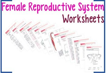 Female reproductive system worksheets pinterest female female reproductive system worksheets pinterest female reproductive system reproductive system and menstrual cycle ibookread Read Online