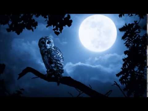 1 Hour Of Celtic Fantasy Music By Martin Aka Epic Music World Youtube Full Blue Moon Owl Silhouette Blue Moon