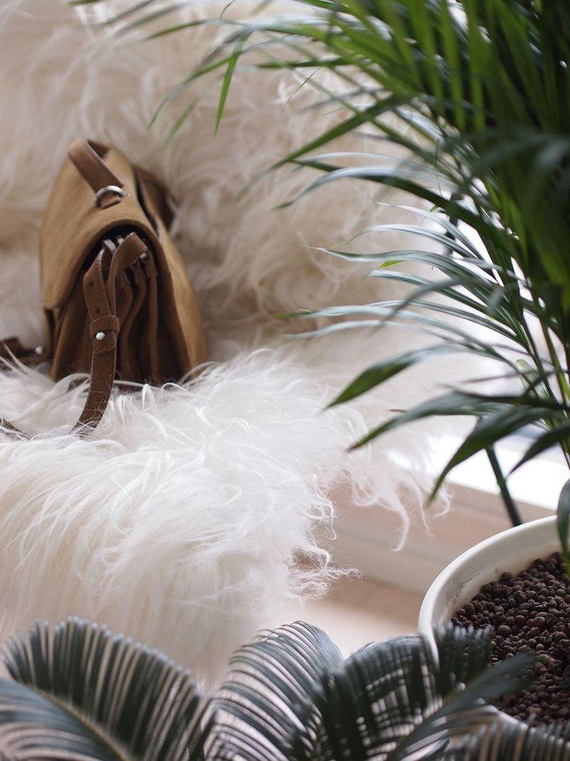 houseplants and fashion